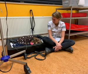 Dierenartsassistent waakt bij zieke hond in de opvang